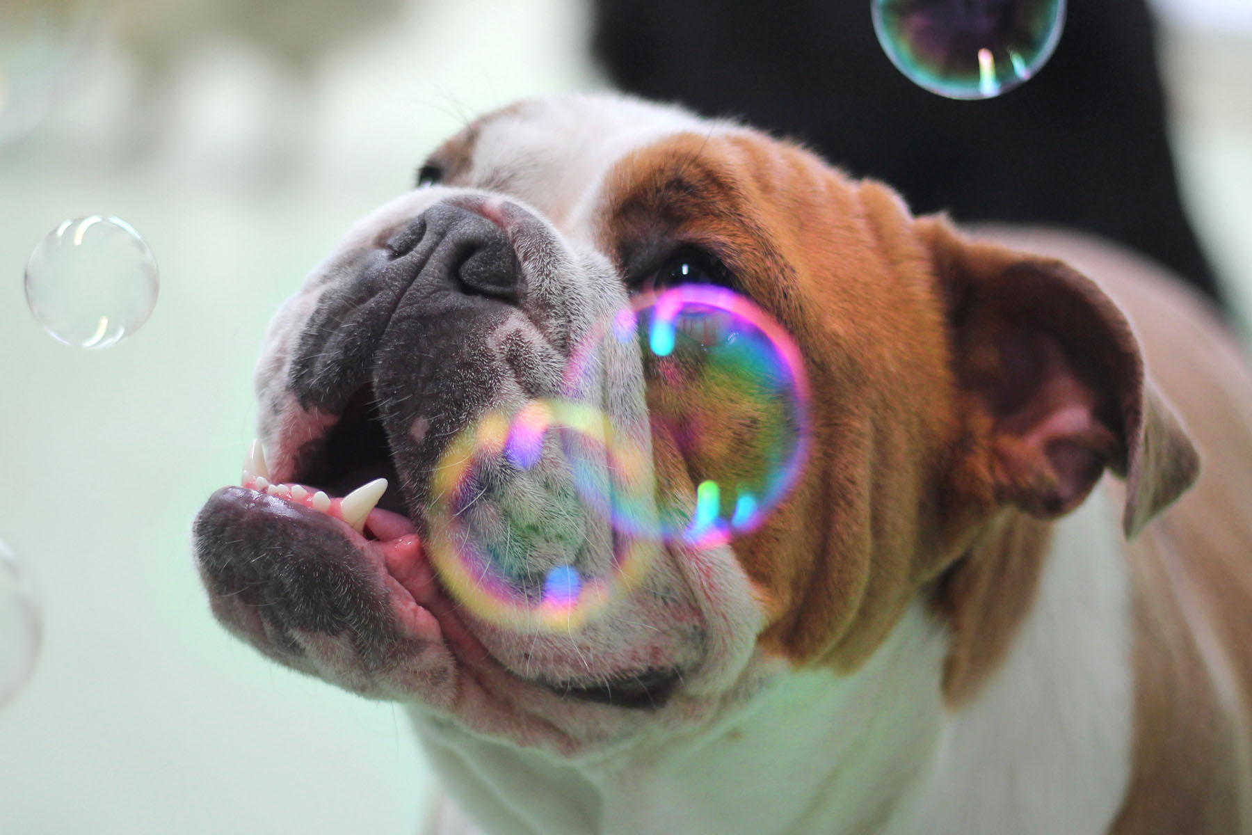 Bubbles Medium