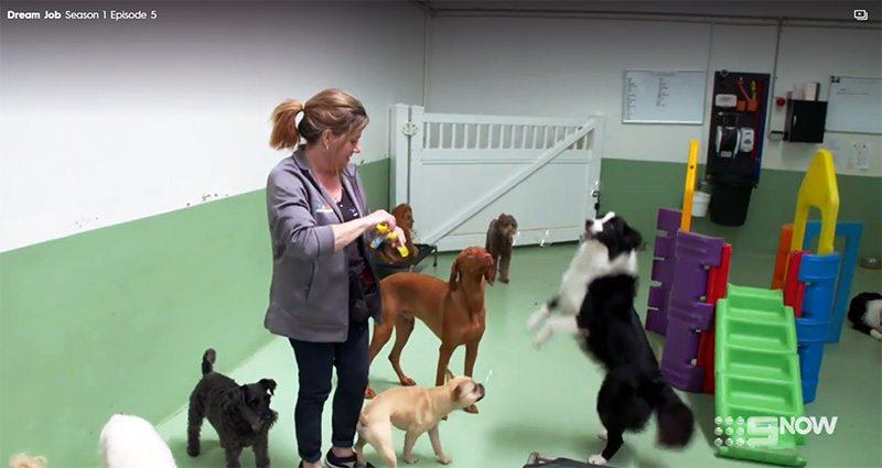 Channel 9 Dream Job diggiddydoggydaycare