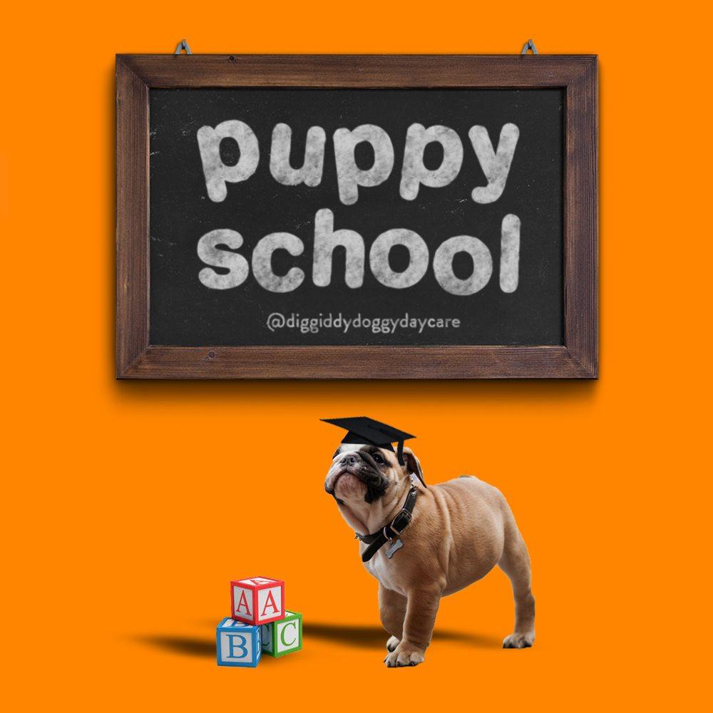 puppy school social media